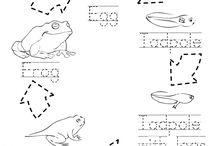 Kinder-Frogs