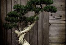 Bonsai / by Susan Syquia