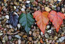 coolplants : leaves