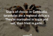 Weird, Random, and Wonderful Travel Facts