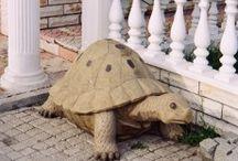Kaplumbağa Heykelleri