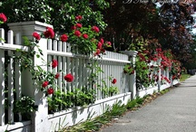 Front yard flowers / by Susan Mahurin