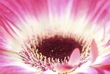 Flowers & Gardening / www.terraefarina.it