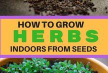 grow harbs