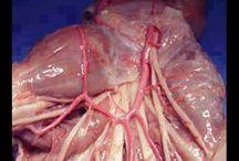 ANATOMIA UMANA / Understanding the Human Body