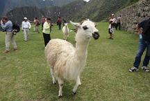 Pérou, un pays de diversités / Des plages de Lima au Machu Picchu en passant par les lignes de Nasza, le Pérou a plus d'un atout pour plaire !