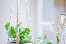 Pflanzenschaukeln
