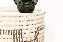 Frenchie Love / French Bulldogs / by Claudette Pet