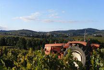 Lancié / Lancié, c'est notre village. Là où nous résidons, en plein milieu des vignes.