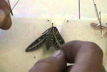 Flutterbug Collection
