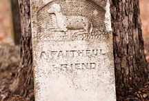 Pet cemetery / by Clayton & Amanda Grigsby