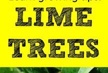 Bäume ziehen