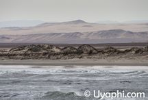 Skeleton Coast (Namibia) / The Skeleton Coast of Namibia is one of Africa's more isolated destinations to visit. One can still see free roaming Desert elephants and lions, now that is what we @Uyaphi call wild. http://www.uyaphi.com/namibia/safari/skeleton-coast.htm