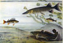 Kaloja ja kalastusta