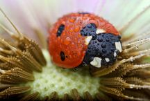 Photography: Macro / by Catherine Wood