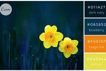 colour schemes for logo design