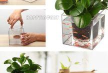 Akvaponik / Om Akvaponik som er en dyrknings metode hvor man anvender fisk som gødning til sine planter