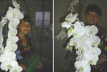 orhidee
