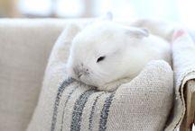 Pet bunny