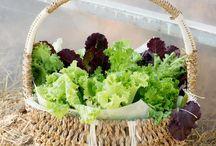 diet before gallbladder removal