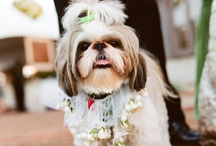 Wedding with our Pets