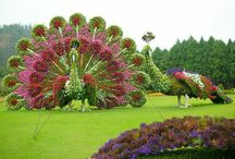 Wonderfull gardens.Beautifull plants. Amazing topiaries.