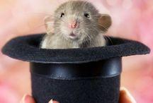 My fav❤️ Rats!