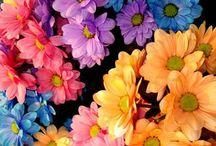 Bloemen / Bloemen  groeien mooi in de tuin