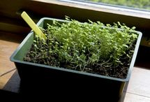 Cheap and Easy Container Gardening / You do not need a yard to have a great garden. Use these tips to get started container gardening.
