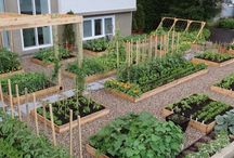 Desain taman sayur