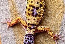 Gecko!!