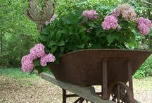 where to plant: containers