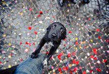 Pics / by Wirginia Leszczynska