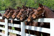 Horses / by Donna Bradford