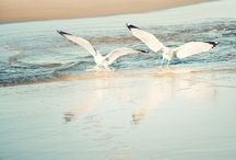 Beaches.....