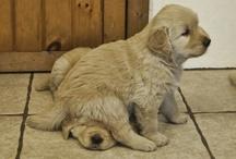 training my pets