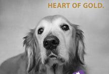 adopt and save