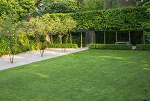 Planting in town gardens / Planting in town gardens by Charlotte Rowe Garden Design