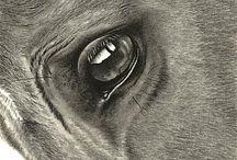 *horse* art