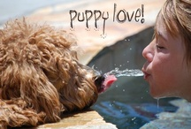 Puppy Love / by Julie Long