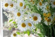 ❤My favourite flower !❤