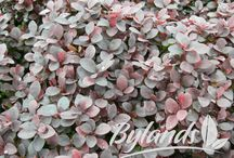 Our sales rep Darlene's top 3 plants for the Edmonton area
