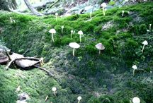 モリノフシギ / 休日は森を棲家にしている。森や山や林道で出会ったフシギたちの写真。