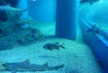水族館 / 魚介類