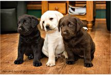 Adorable / Dogs puppies