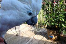My beautiful Birds / My 3 birds !