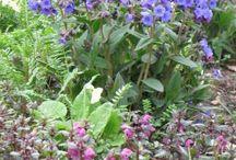 Style: Natural garden