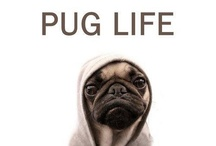 {Pug Love} / All Pug everything / by Erin Nichols