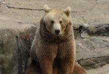 Bears forlorn