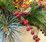 Shrubs with Winter Fruits / by Nebraska Statewide Arboretum